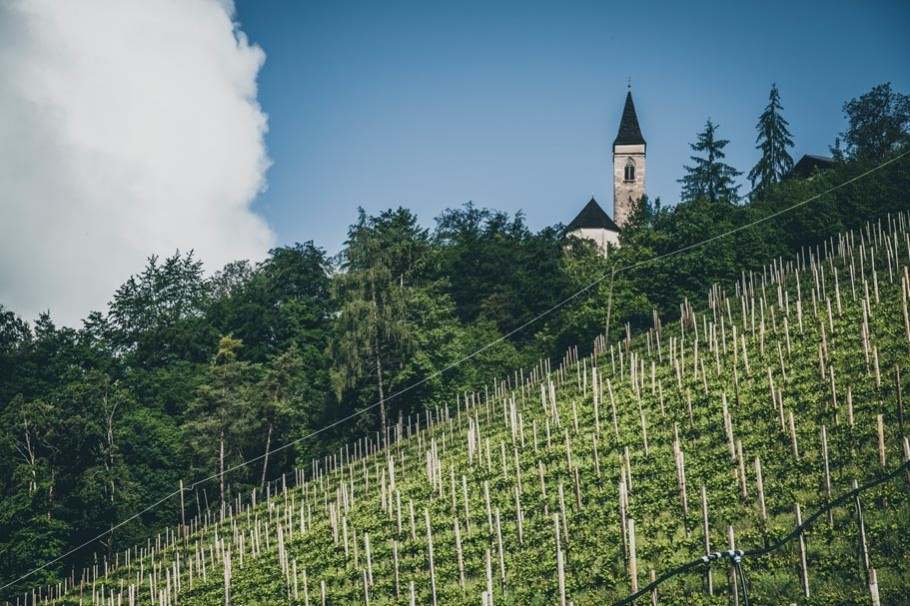 Vineyard and church in South Tyrol