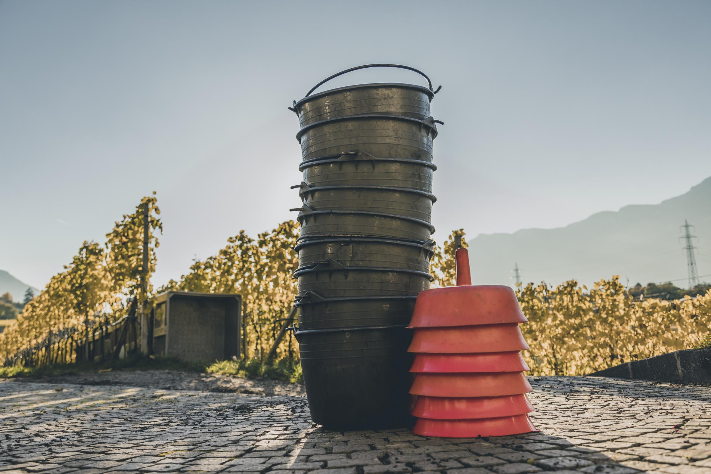 Wine harvest container
